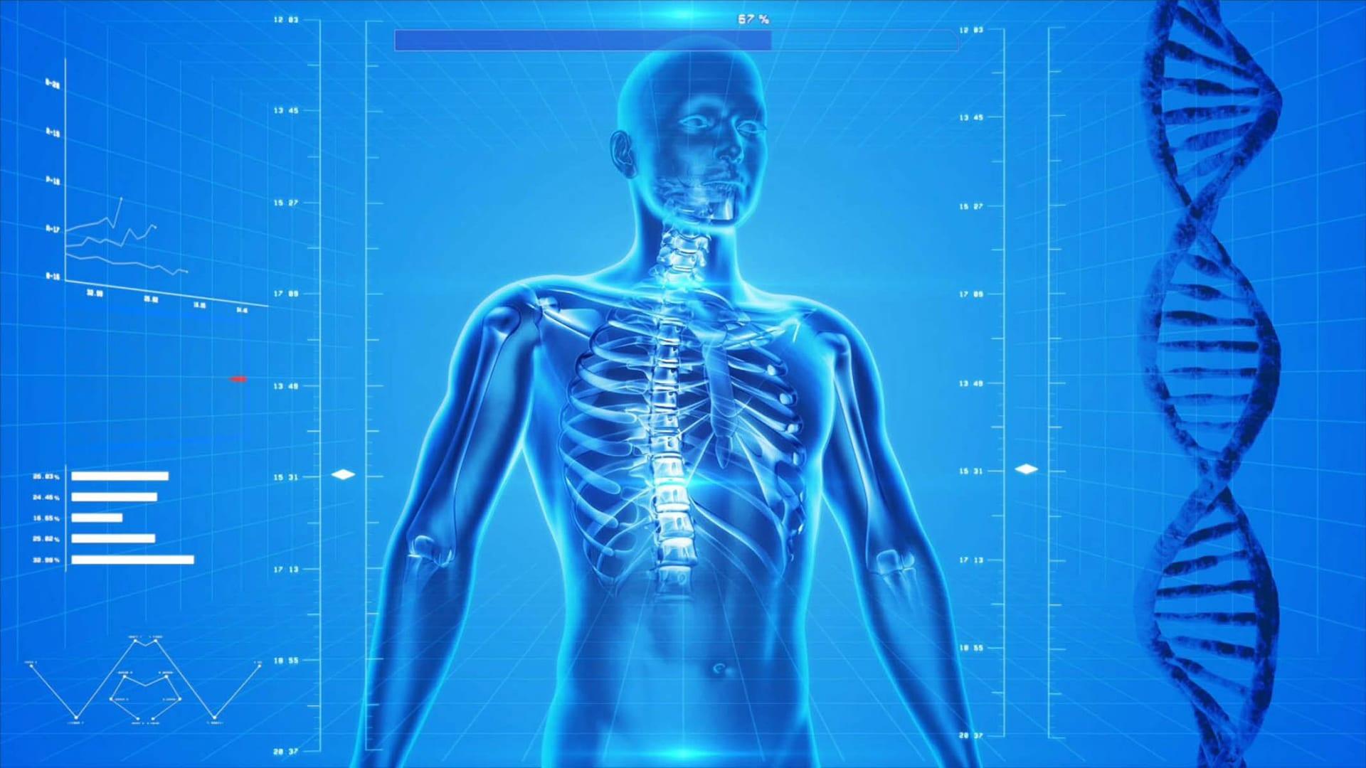 Der menschliche Körper als Vorbild für Energiespeicher von morgen