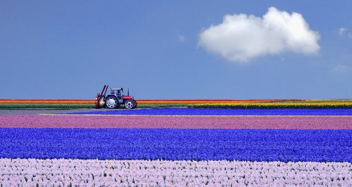 For Dutch Flower Group, big data is great!